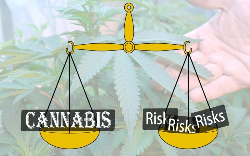 Many Risks to Cannabis Industry Investors